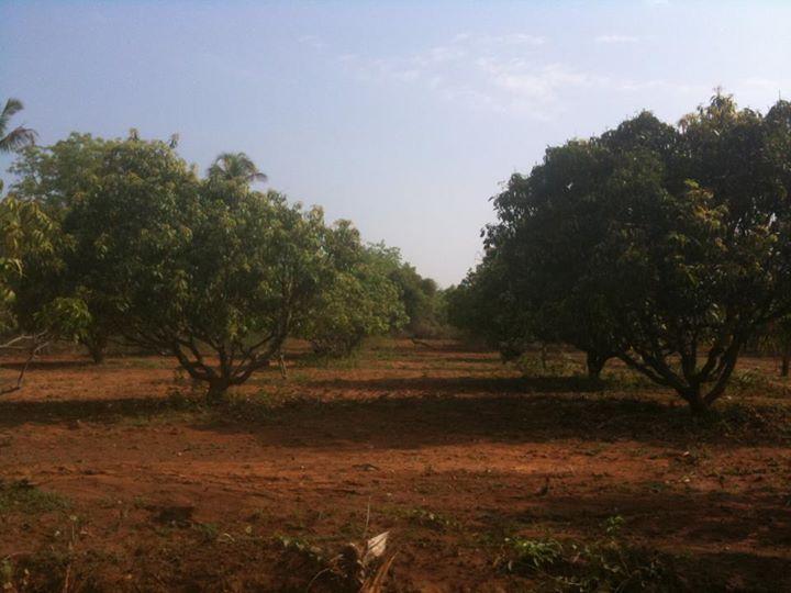22-05-2013 - Terra su cui sorgerà lo Sri Prema Charitable Village